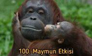 100. Maymun etkisini duymuş muydunuz?